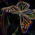 Neon Butterfly by Tim Allen