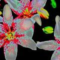 Neon Lilies by Beth Akerman