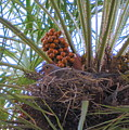 Nesting Dove by Lessandra Grimley