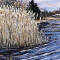 New England Pond by Richard Nowak