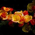 Night Begonias Two by John Ater