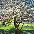 North American Magnolia Tree by Michelle Caraballo