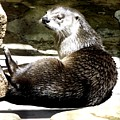 North American River Otter by Rose Santuci-Sofranko