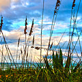 November Day At The Beach In Florida by Susanne Van Hulst