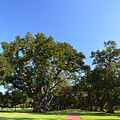 Oak Alley Plantation Panoramic by Maggy Marsh