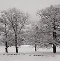 Oaks In Winter by Gabriela Insuratelu