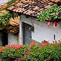 Old Buildings In Puerto Vallarta Mexico by Elena Elisseeva