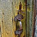 Old Door by Diana Hatcher