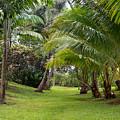 Old Hawaiian Garden by Roger Mullenhour