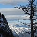Old Larch Tree Has Best View by Greg Hammond
