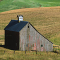 Old Palouse Barn by Sandra Bronstein