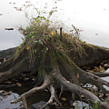Old Tree Stump With Flowers by Richard Botts