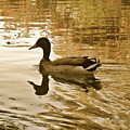 On Golden Pond by Maureen J Haldeman