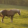 On The Sunny Meadow by Angel Ciesniarska