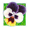 One Pansy For Marti by John Lautermilch