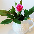 One Sweet Rose by Marsha Heiken
