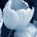 Opening Tulip Flower Blue Monochrome by Jennie Marie Schell