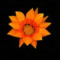 Orange Daisy by Karen Lewis