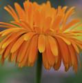 Orange Glow by Deborah Benoit