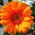 Orange by Judy  Waller