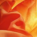 Orange Silk by Stefania Levi