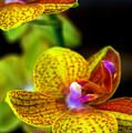 Orchid-0022 by Sean Shaw