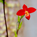 Orchid-0026 by Sean Shaw