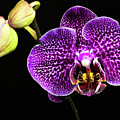 Orchid by Christopher Holmes