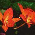 Orchid by Galeria Trompiz