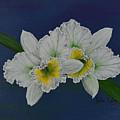 Orchid by Roberta Landers