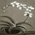 Orchids In Black And White by Gina De Gorna