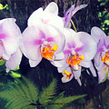 Orchids Of Hawaii by Dina Holland