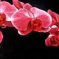 Orchids by Takayuki Harada