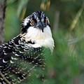 Osprey 30 by Joyce StJames