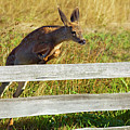 Over The Fence by Randall Ingalls