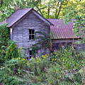 Overgrown Abandoned 1800 Farm House by Douglas Barnett