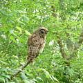 Owl II by Kathy Schumann