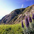 Pacific Coast View With Blue Wildflowers by George Oze