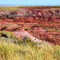 Painted Desert 0242 by Sharon Broucek