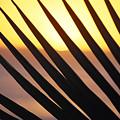 Palm Frond Detail by Bill Schildge - Printscapes