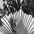 Palm Frons by Rob Hans