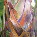 Palm by Lisa Boyd