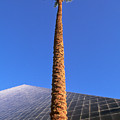 Palm Tree And Luxor by Rich Iwasaki