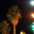 Palm Tree Glow by Heather S Huston