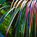 Palms by Donna Bentley