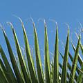 Palms by Kathy Roncarati