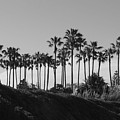 Palms by Shari Chavira