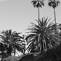 Palms2 by Shari Chavira