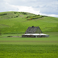 Palouse Old Barn by Louise Magno