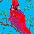 Parrot by Richard Heyman